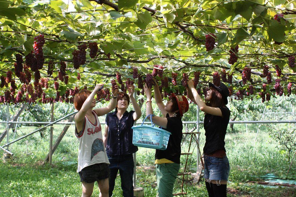 山梨でフルーツ三昧!果物狩りや加工体験、フルーツ温泉などを楽しもう