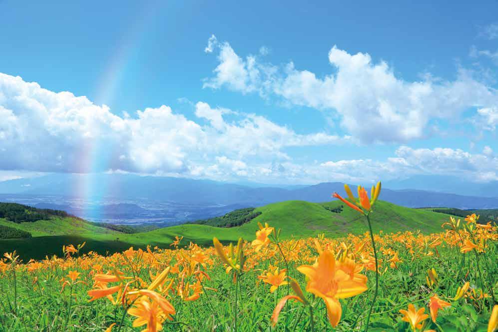 7月中旬はニッコウキスゲの見頃となっており、8月中旬にはヤナギランが見頃です。 人気の絶景ドライブルート「ビーナスライン」を通って、夏の高原ドライブへ出かけま