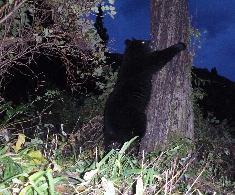 クマの調査