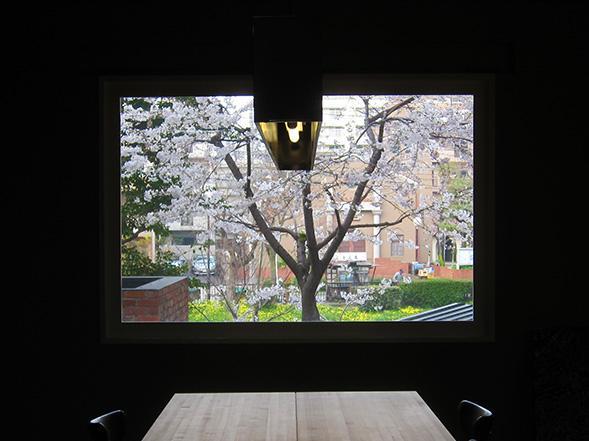 2階の共用スペースの窓から桜