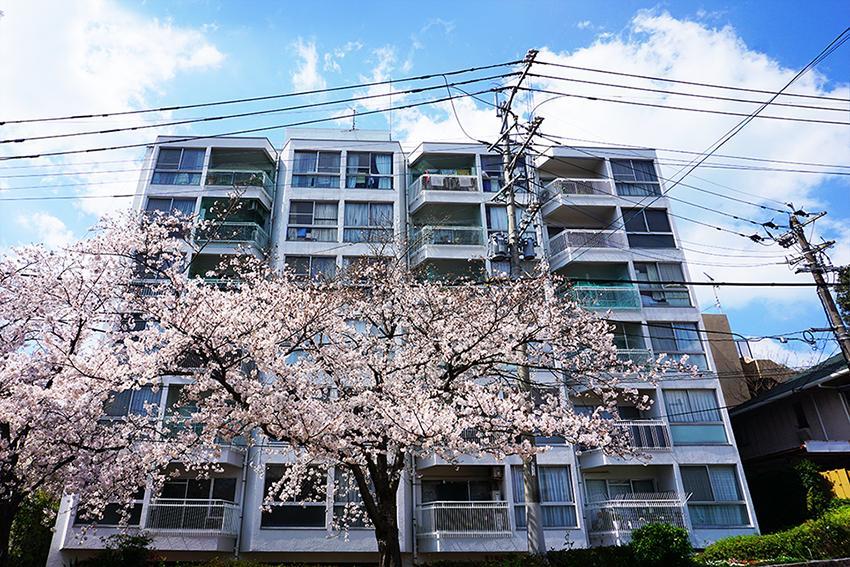 桜の海に浮かぶ (福岡市中央区西公園の物件) - 福岡R不動産