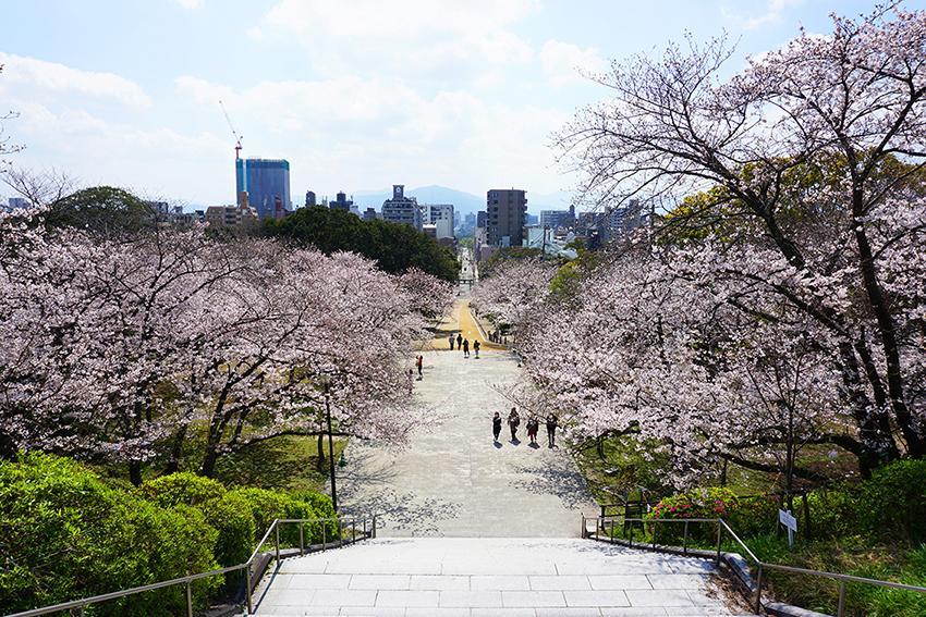 西公園の桜並木の絶景。