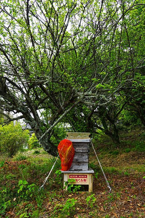 庭で見つけた蜜蜂の巣箱。多くの蜜蜂が元気に出たり入ったりしていました。