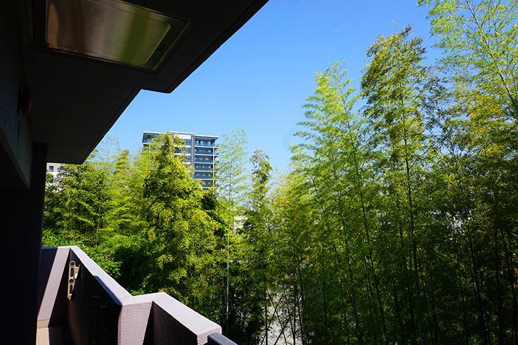 ベランダからの竹林の眺め。