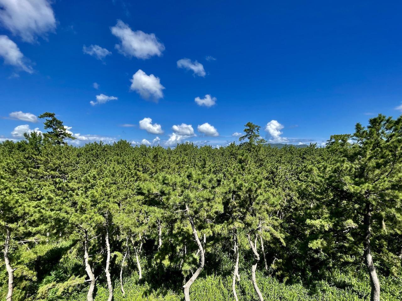 シーサイド・ジャングル (福岡市西区生の松原の物件) - 福岡R不動産