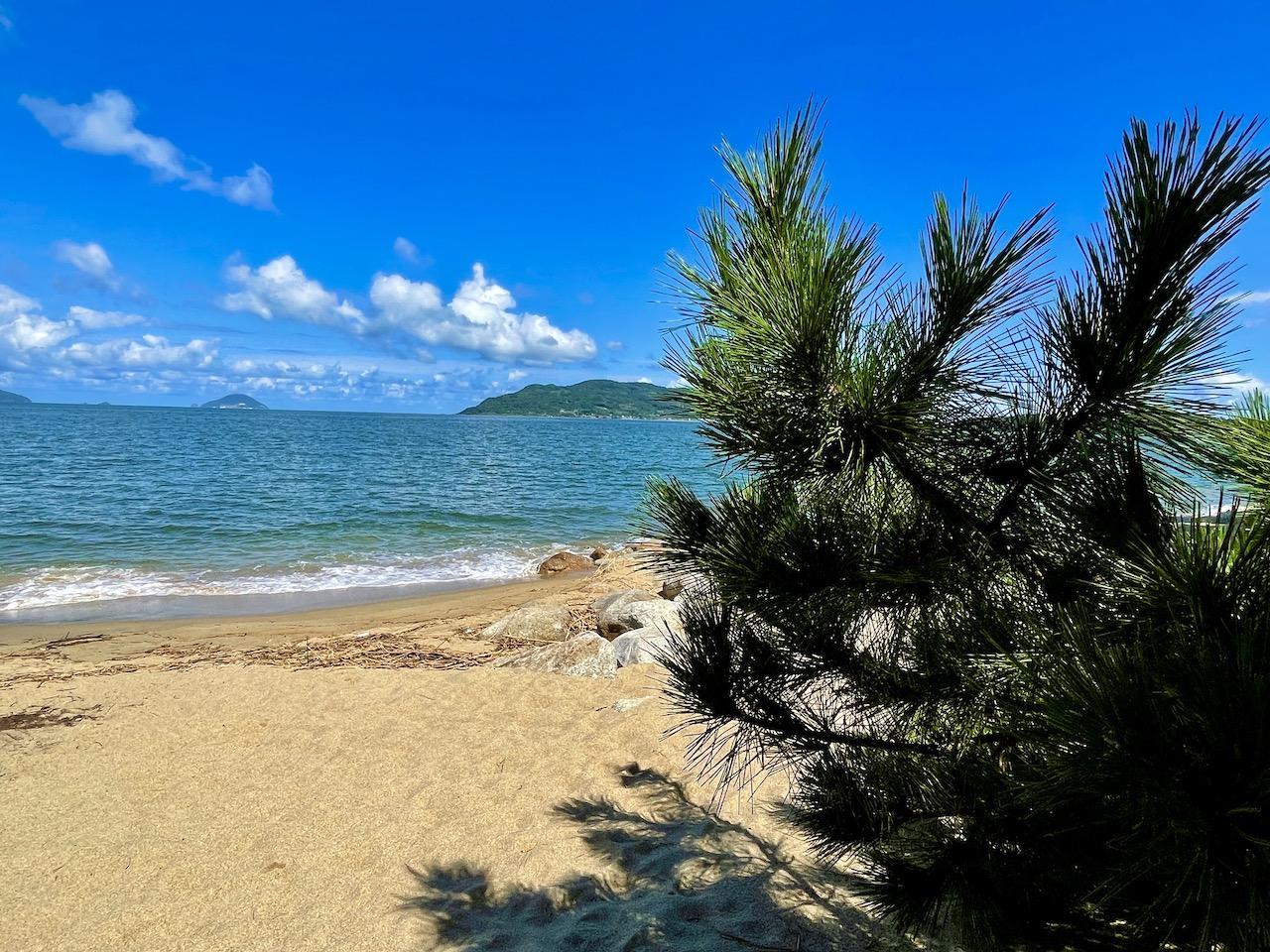 海にはヤシの木?松の木でしょ!!