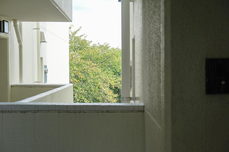 階段を上がっている最中も、木々が視界に入ってきます。