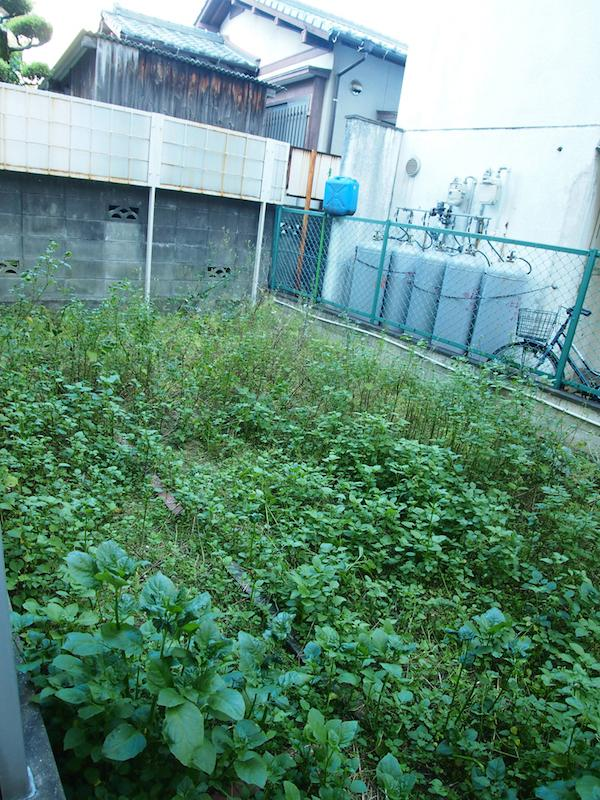 現状、野草がモサモサしてますが、なかなか広めの専用庭付き