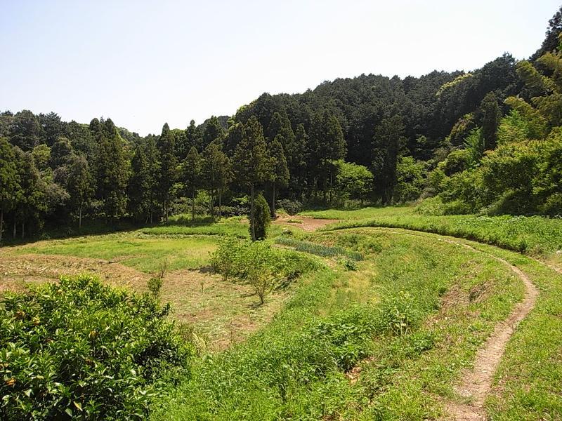 裏山にある広大な田んぼや畑。がっつり農業できます。