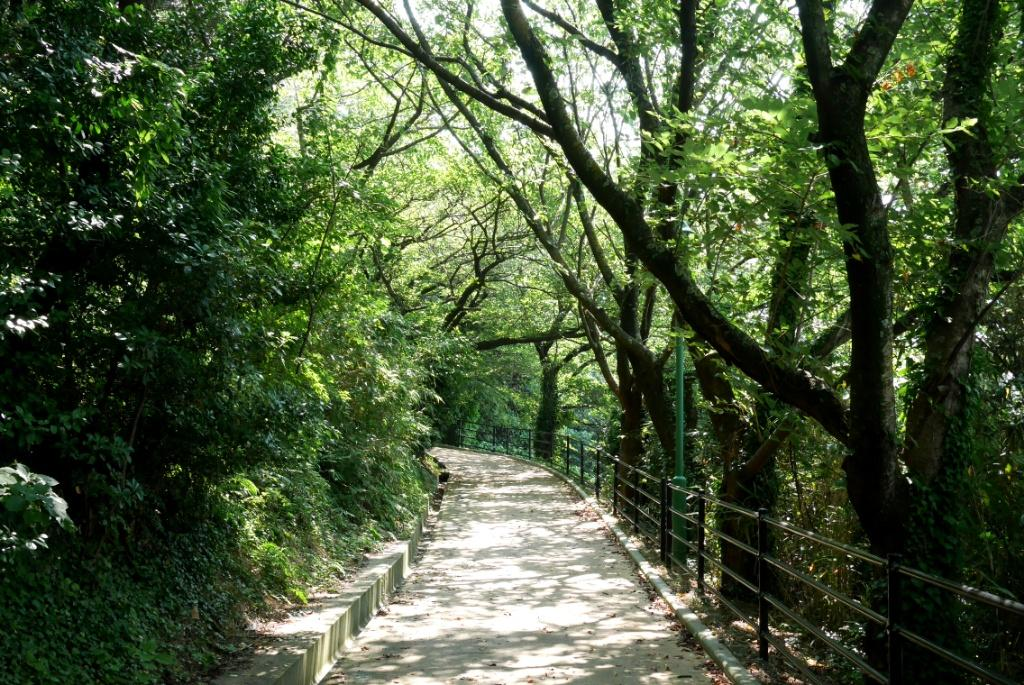 この緑道、余裕の徒歩圏内
