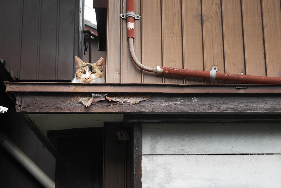 ペット不可ですが、敷地内に猫見つけましたよ