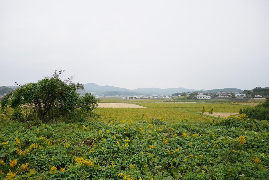 この田舎感とベッドタウンの機能性を兼ね備える点が、宗像の魅力です。