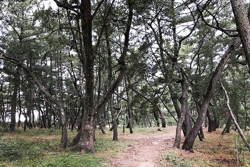 地域のイベントも開催される松林。お散歩にもGOOD。