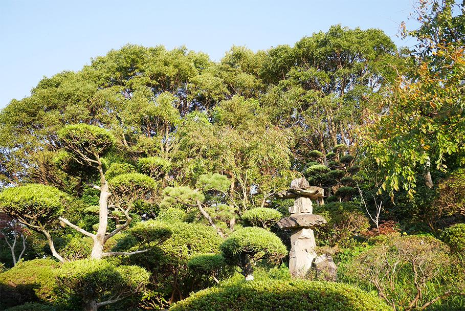 立派な樹木たち。