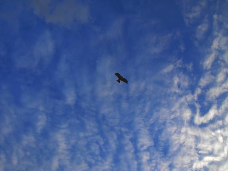 鳥になりたい。。。