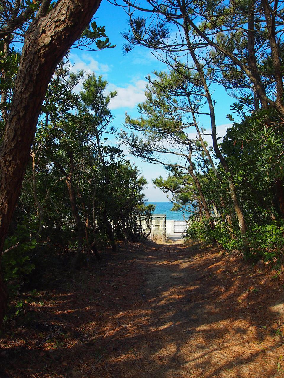 松林を抜ければ海はすぐそこ