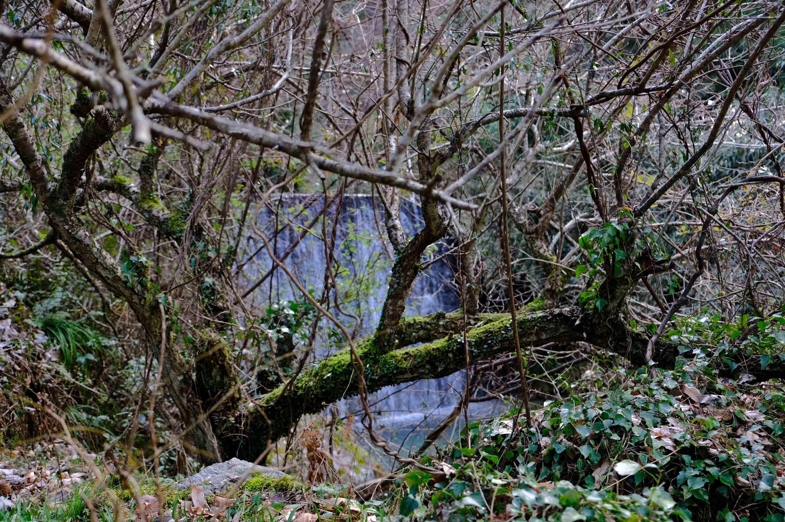 小さな滝もあってその音がなかなか心地よいです。