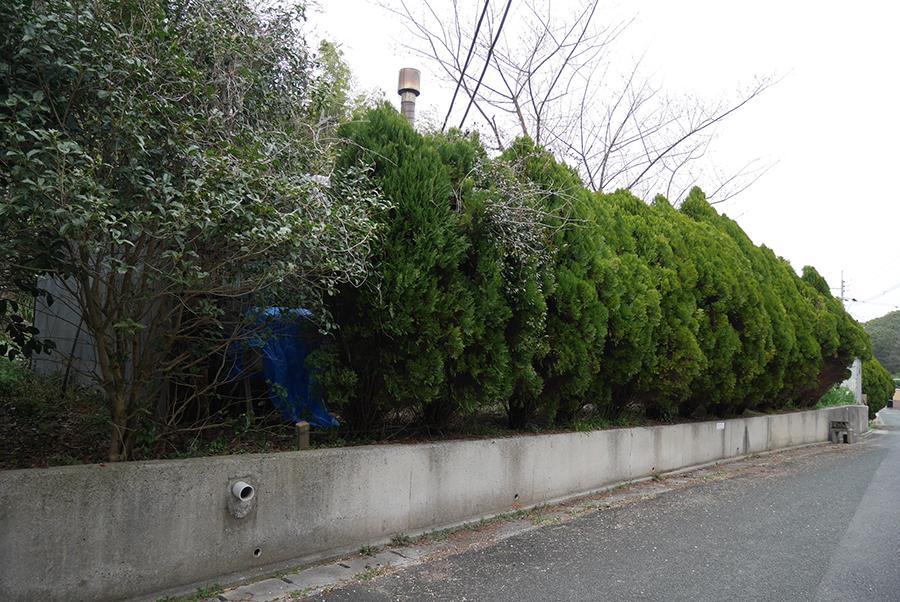 外周りは植栽を目隠しに。