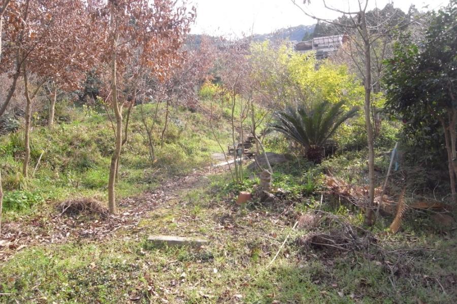 立ち木を生かして順路が設けられています。