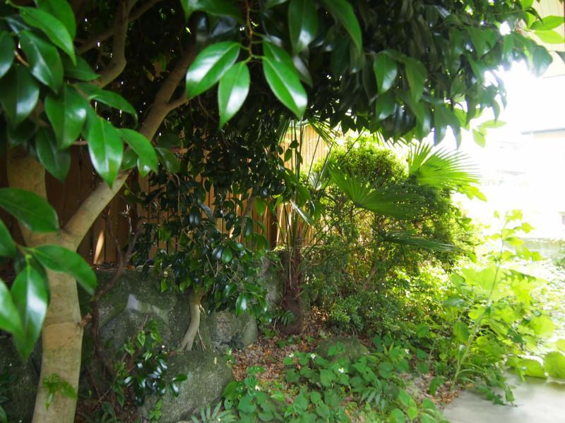 敷地内南側にお庭もありますが、季節柄草木が生い茂ってます!