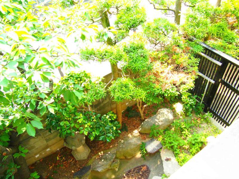 小さいお庭ですが植栽の鮮やかな緑だけで幸せです。