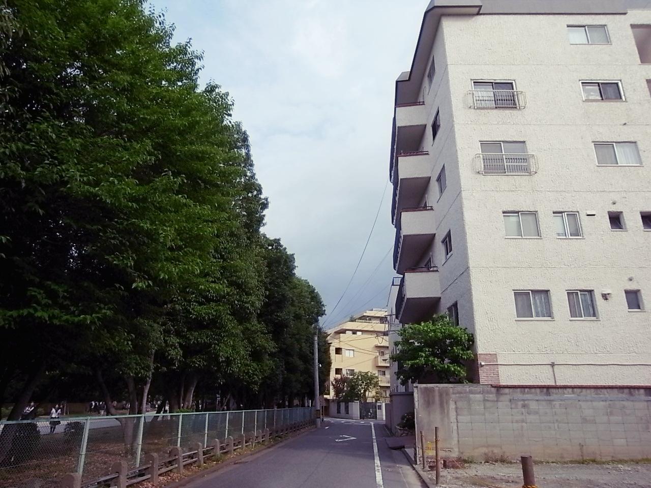 大濠の葉っぱとマンションのタイルがキッスしそうな距離感。