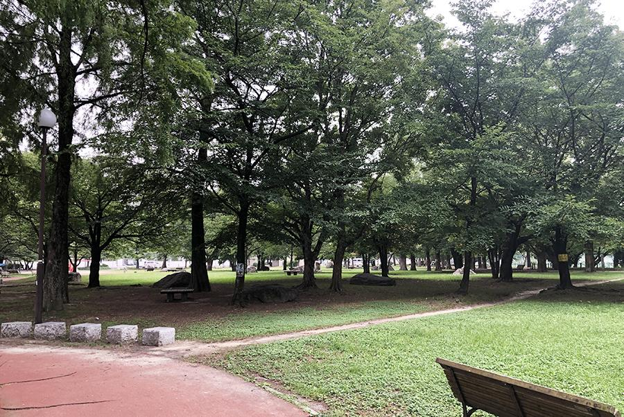 山王公園。ワンチャンの散歩を考えがちですが、人間的にも嬉しい環境です。