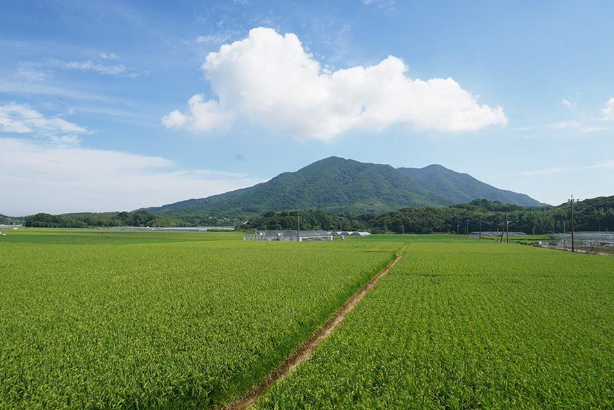 田園と山。表の道から撮影した、美しい景色。