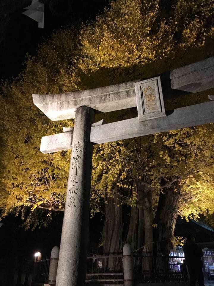 秋が深まると色づく二日市八幡宮の公孫樹