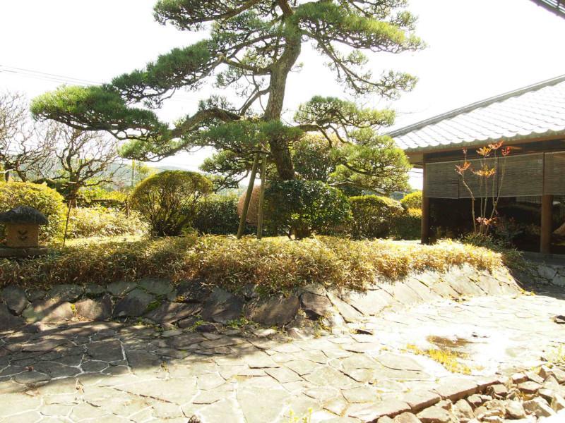 代々大切にされてきた松の木。