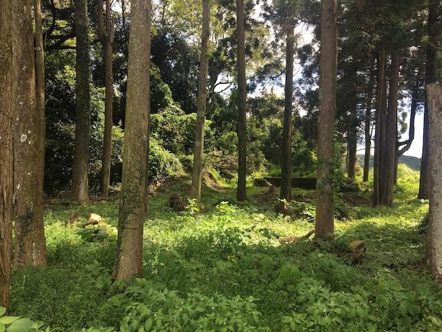 小さな森 (日置市日吉町日置の物件) - 鹿児島R不動産