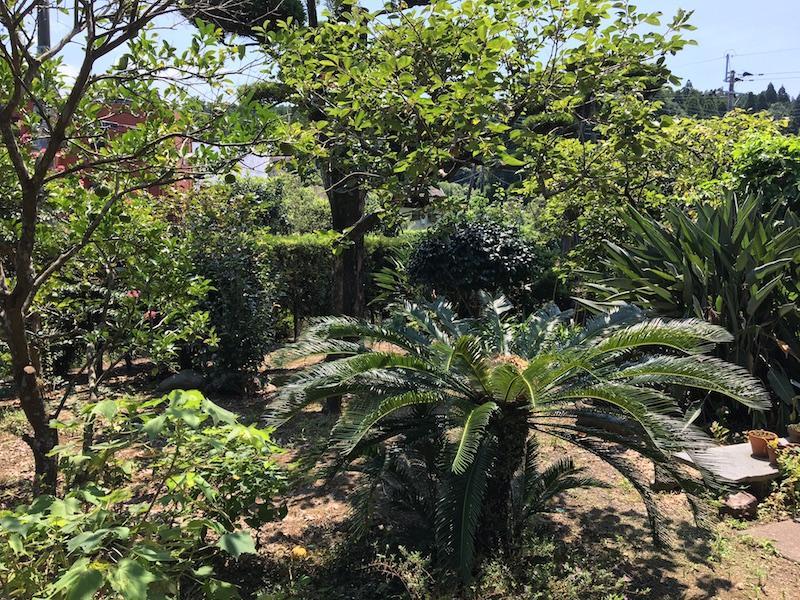 南国っぽい植物あります。