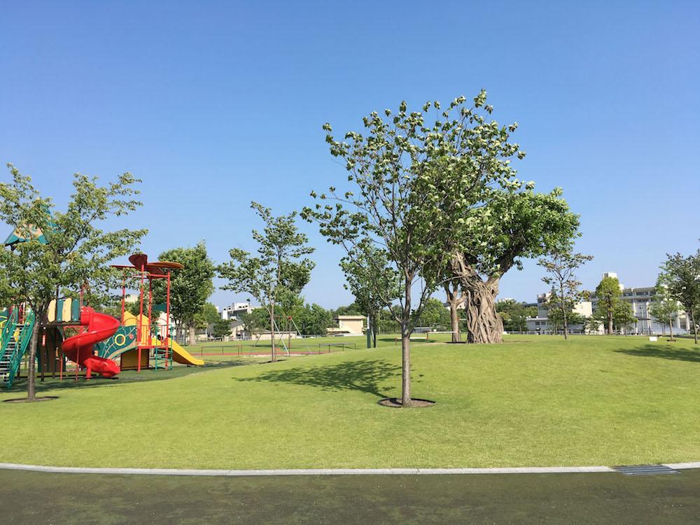 隣接する公園。芝生がきれい