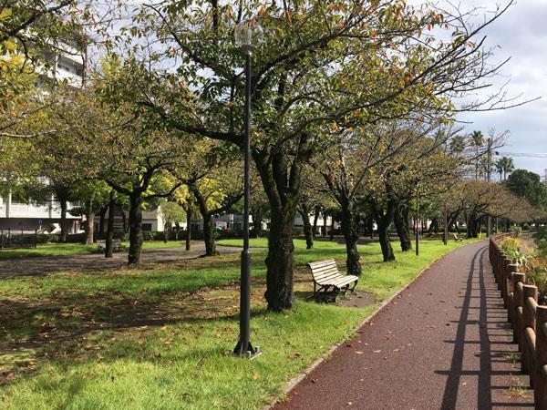 Cherry Blossoms (鹿児島市新屋敷町の物件) - 鹿児島R不動産