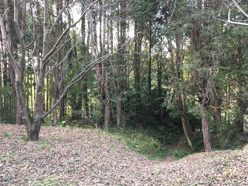 奥に入っていくと雑木林。あえて整備せずこのまま活かすのもあり?
