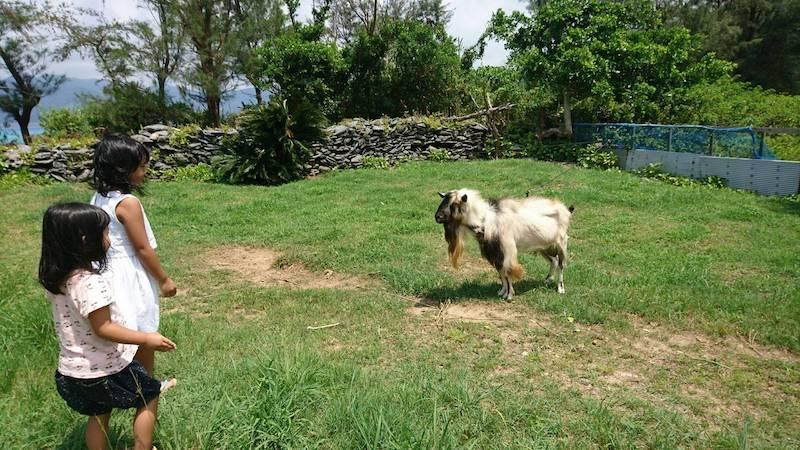 近所のヤギともお友達になれます。