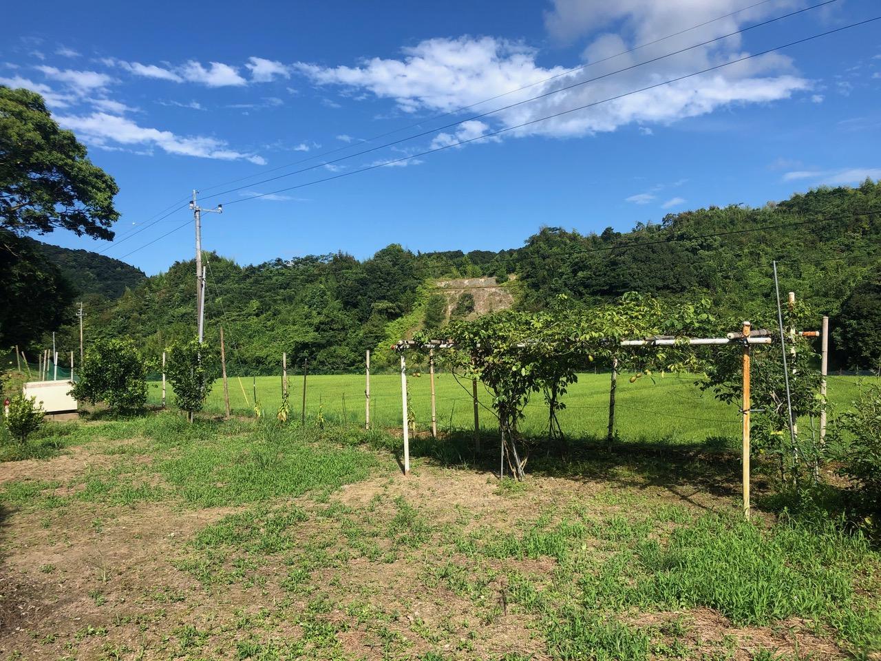 果樹園ではサワーポメロやあけび、柿なども収穫可能