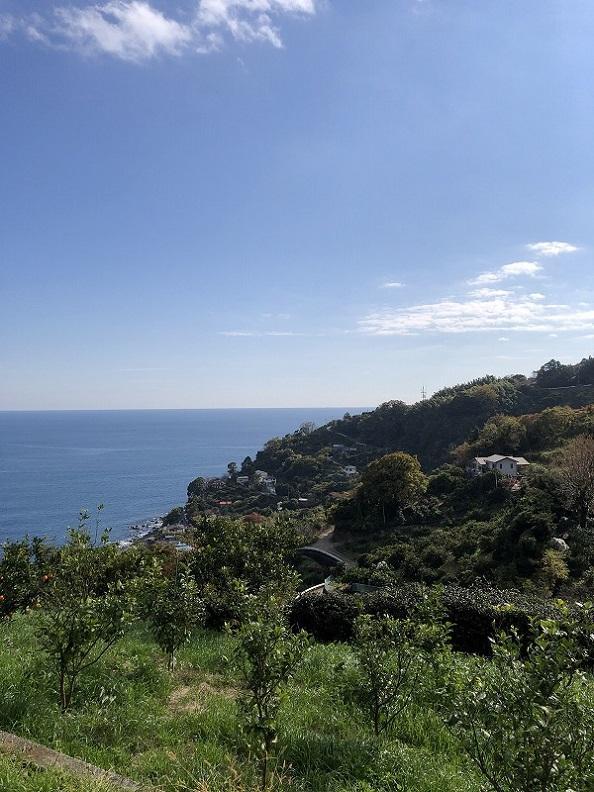 空と海と緑