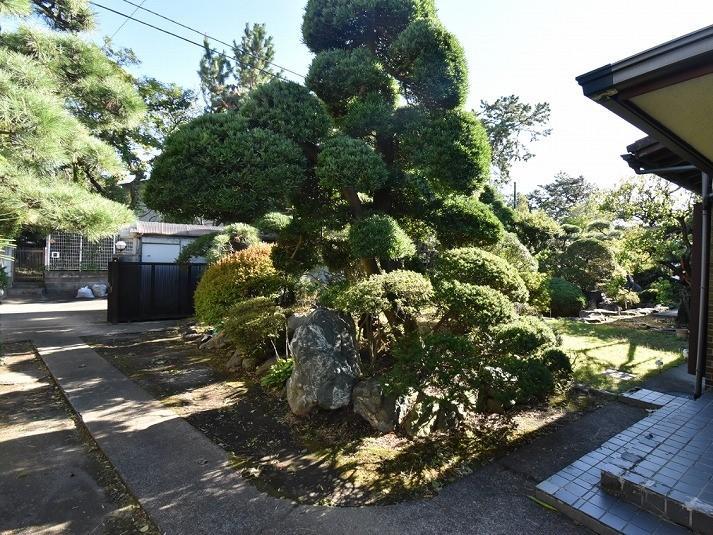立派に整った松の木