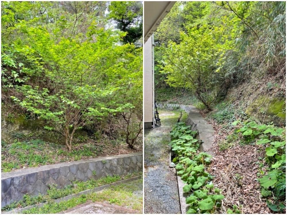 隣地の緑がきれいな時期になってきました