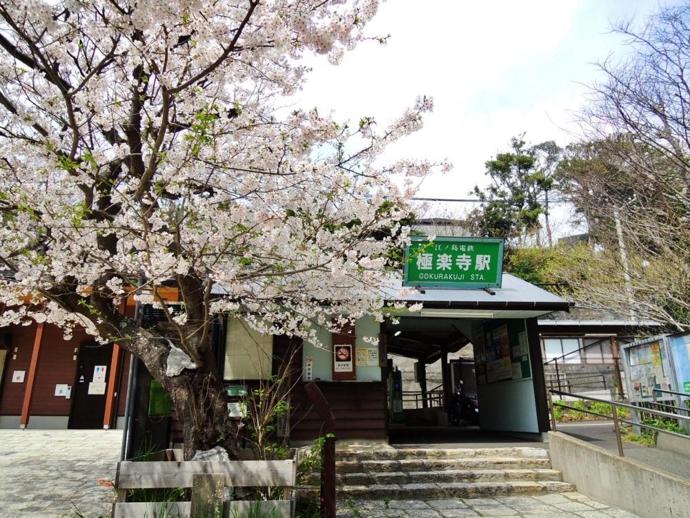 極楽寺駅までは桜を見ながら