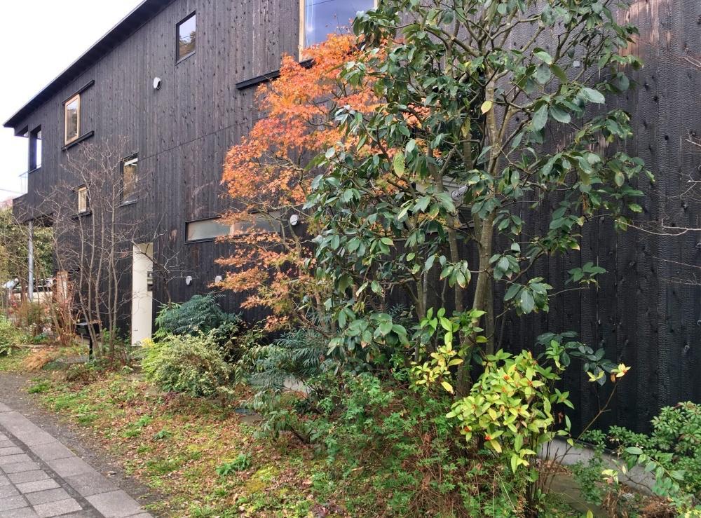 建物と道路に沿うように植栽が並び通りの景観となる
