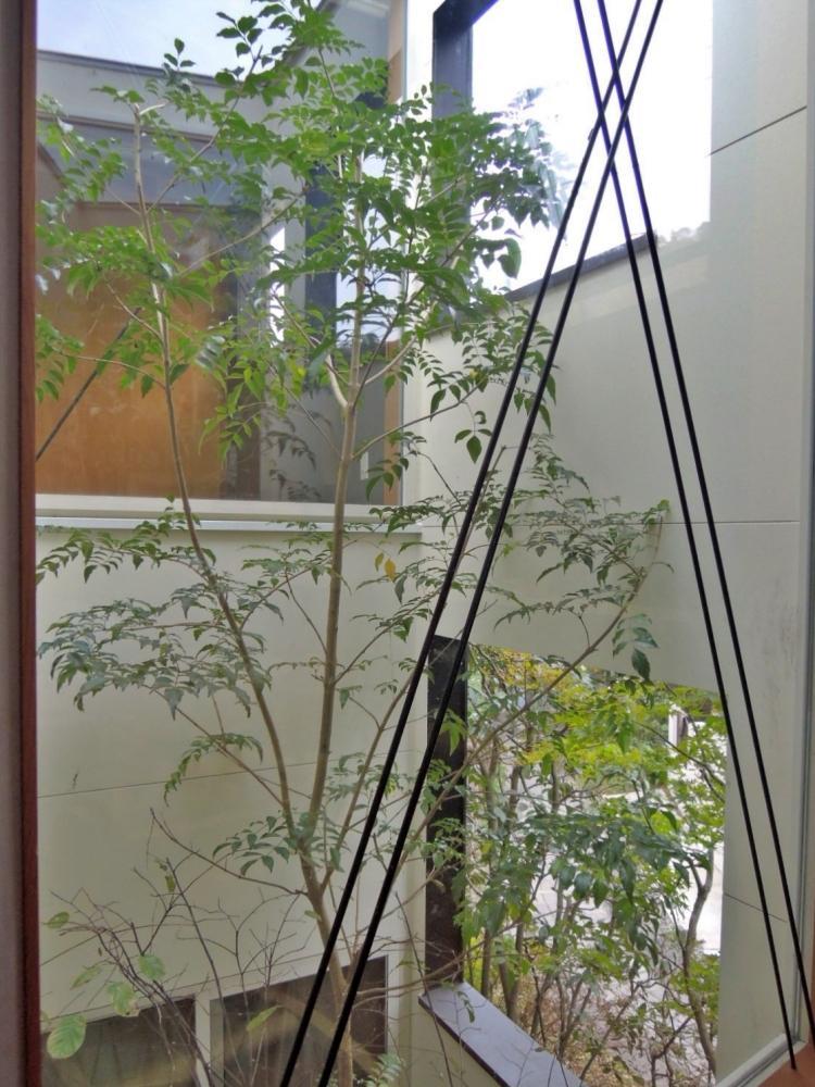 中庭の木はダイニング、和室から見ることができる
