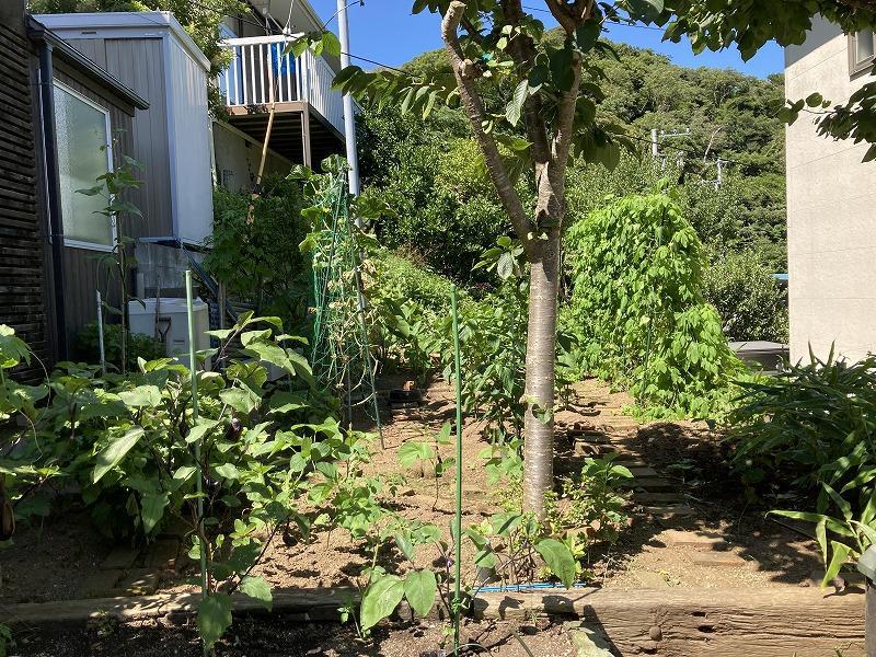 畑にはゴーヤ、ナス、トマト、枝豆などなど数えきれないくらいの野菜類が栽培されています。