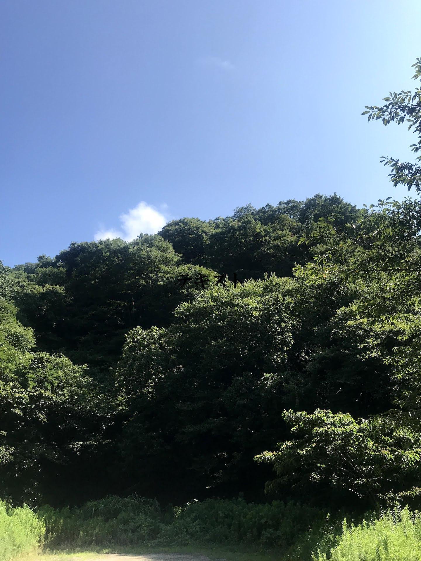 周辺(葉山らしい空と緑)