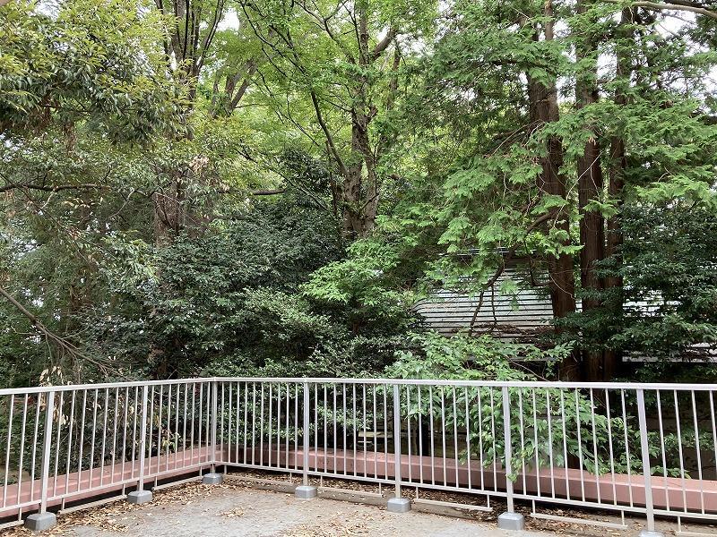 自分の家のテラスから神社の緑