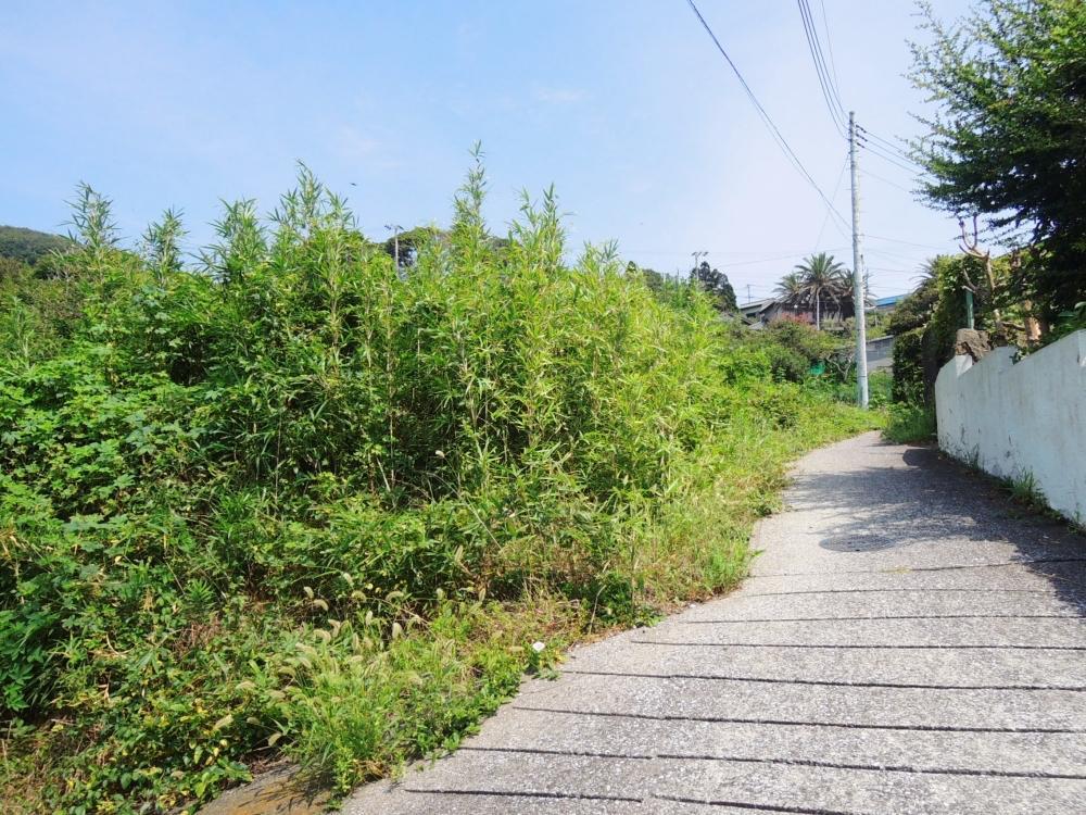 こちらは下から。草木が生い茂っていて全貌は確認できない