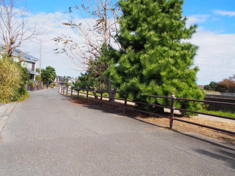 境川の川沿いは散歩に最適。道は江ノ島まで続きます。