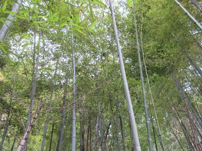裏手に竹林が広がります