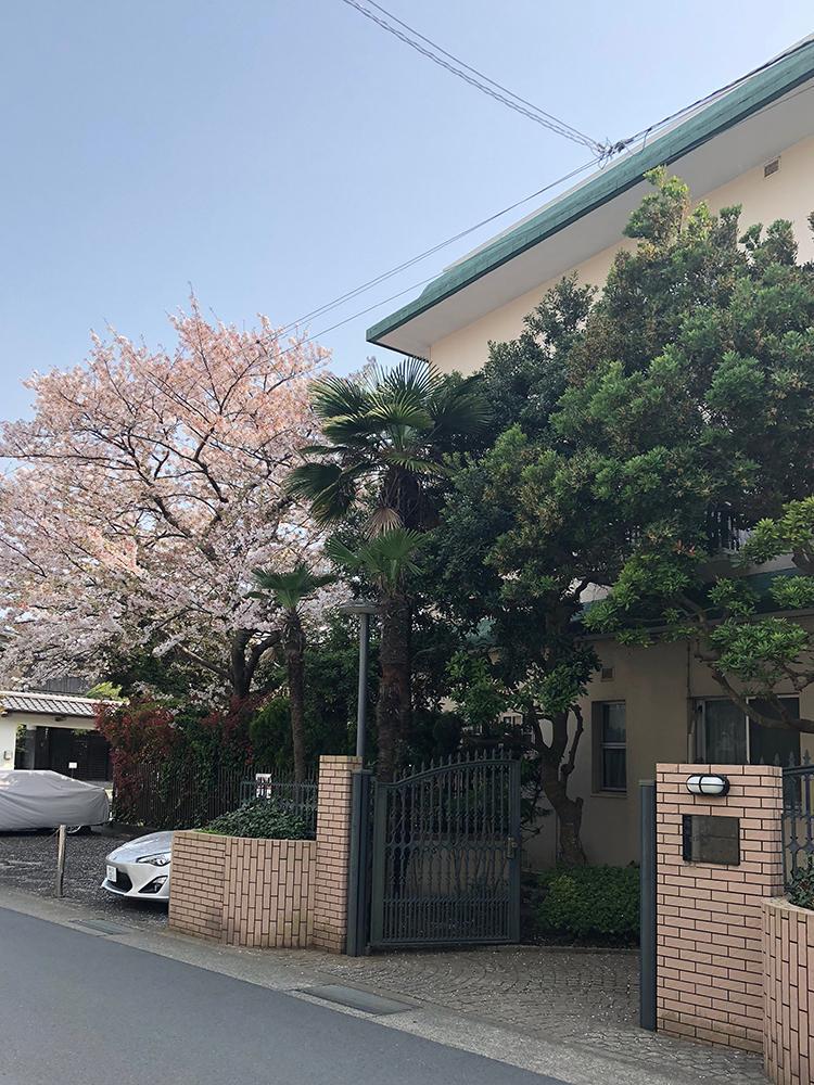 桜の時期のマンションエントランス(写真:オーナー提供)
